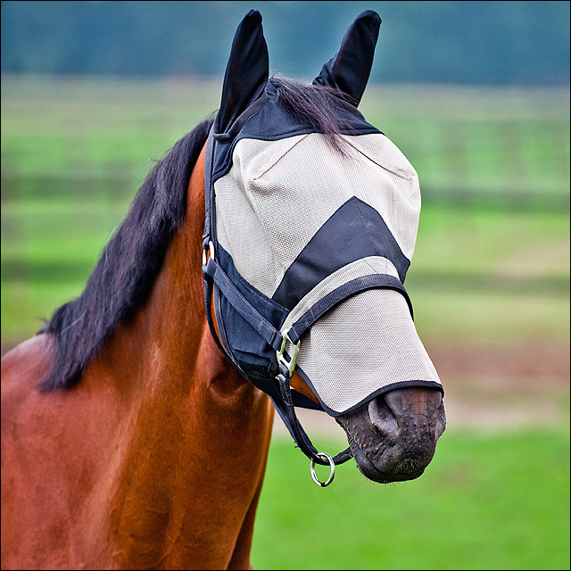 C-BL-F Full Horze Cheval Long Nez Nylon rayons UV Protect Fly Mask Hood Cover Front